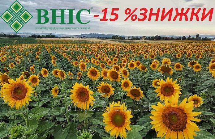 Насіння соняшника ВНІС нового врожаю із ЗНИЖКОЮ 15%