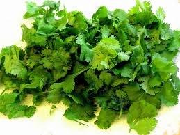 Buy Sale of greens across Ukraine, Cilantro wholesale in Melitopol