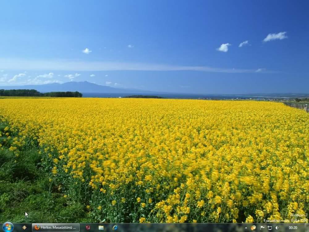 Купить Ріпак ярий стійкий до гліфосфатів не є продуктом генної інженерії (селекція) БЕЗ ГМО