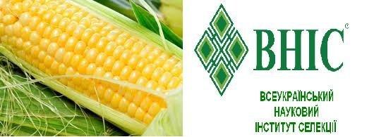 Семена Кукурузы  Гран 310 (ФАО 250)