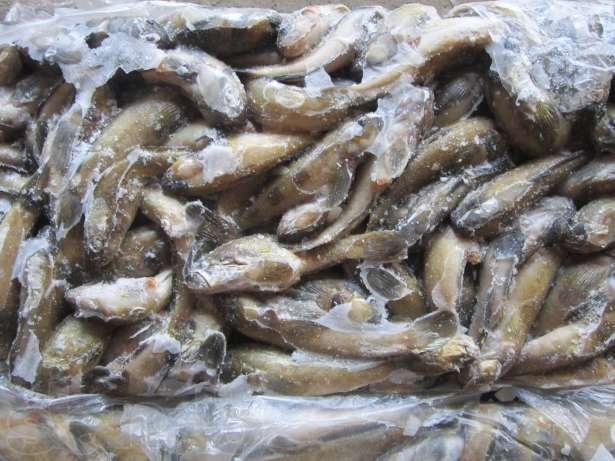 В Крым не пропустили 35 тонн рыбы из Украины
