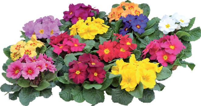 Рассада цветов.заказать искусственные цветы для свадебного оформления купить