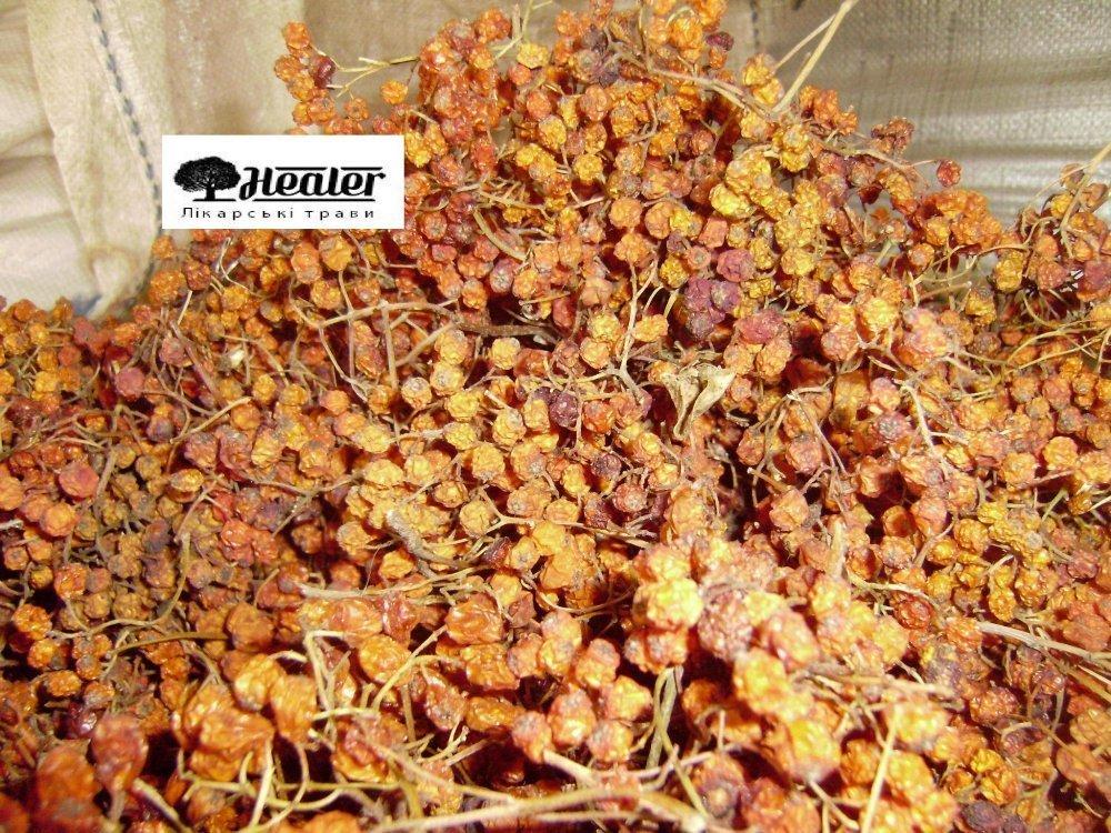 Buy Mountain ash red, berries dry, 100 g