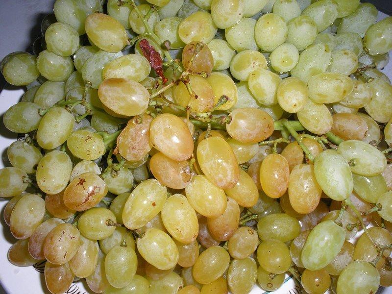 Купити Виноград киш-миш