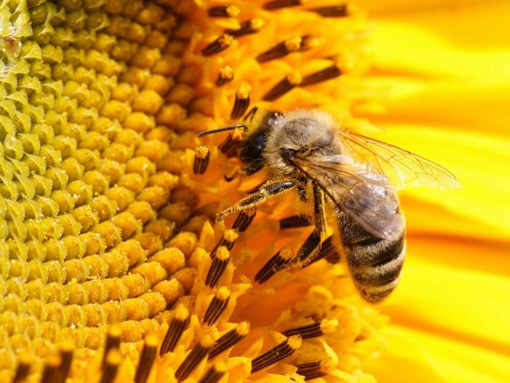 Купить Пчелиные отводки, семьи