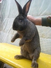 Купить Кролики