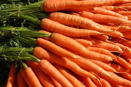 Купить Морковь свежая мытая и немытая.