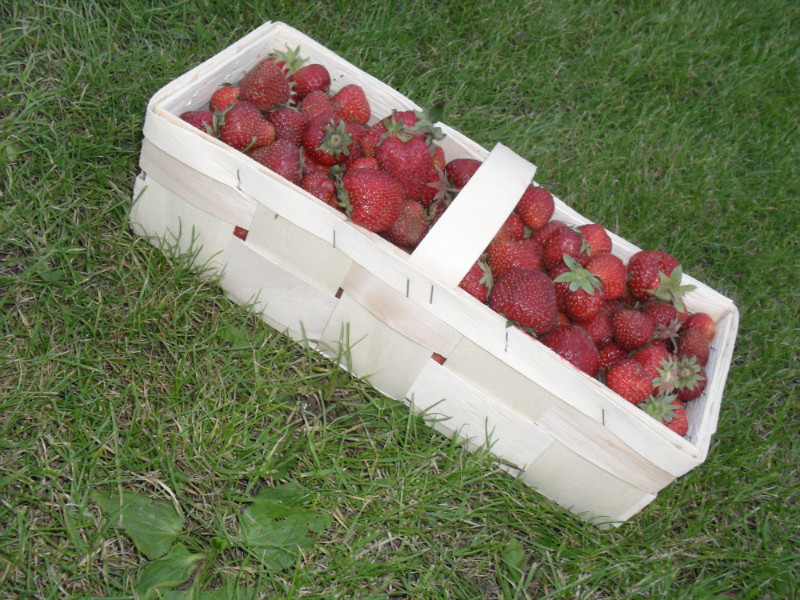 Купить Тара для полуниці