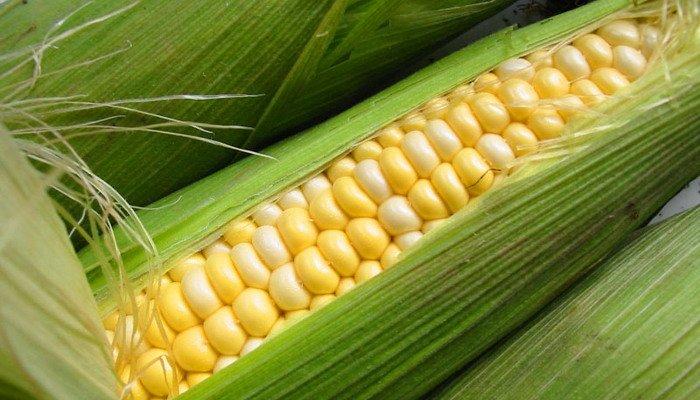 Кукуруза продовольственная навалом на экспорт