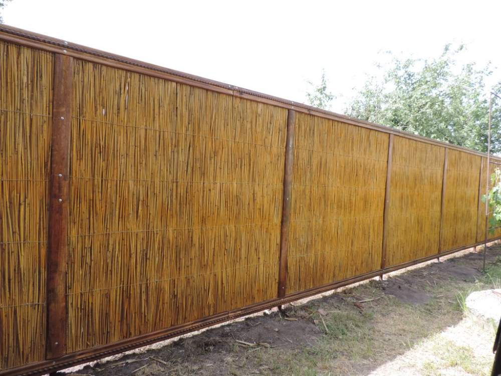 Buy Fences from a cane