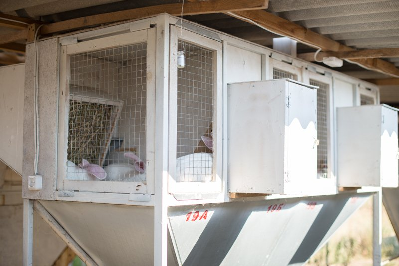 Buy Cages for breeding rabbits, farms for rabbits, farms for breeding rabbits