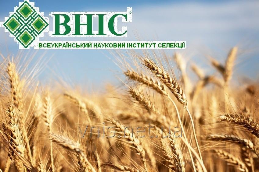 Семена озимых зерновых культур