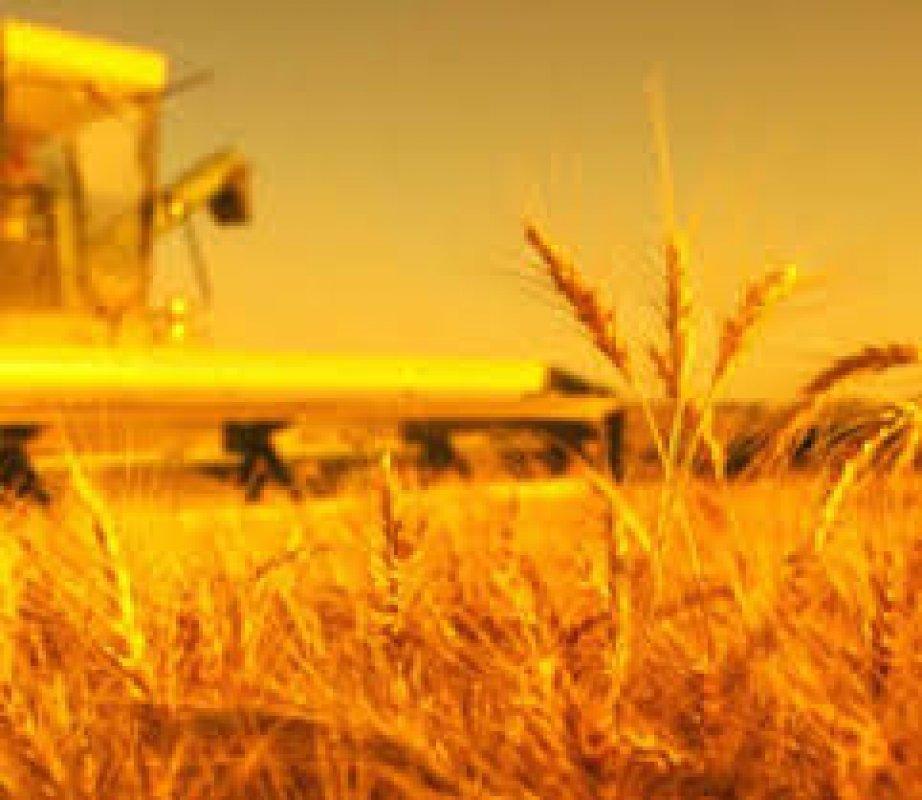Купить Пшениця озима ВИТА