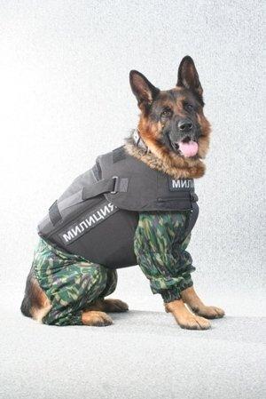 Купить Бронежилет для собак. Собачий бронежилет. Бронежилет для служебных собак.Бронежилет для охотничьей собаки. Бронежилет собачий для разминирования. Бронежилет кинологический.