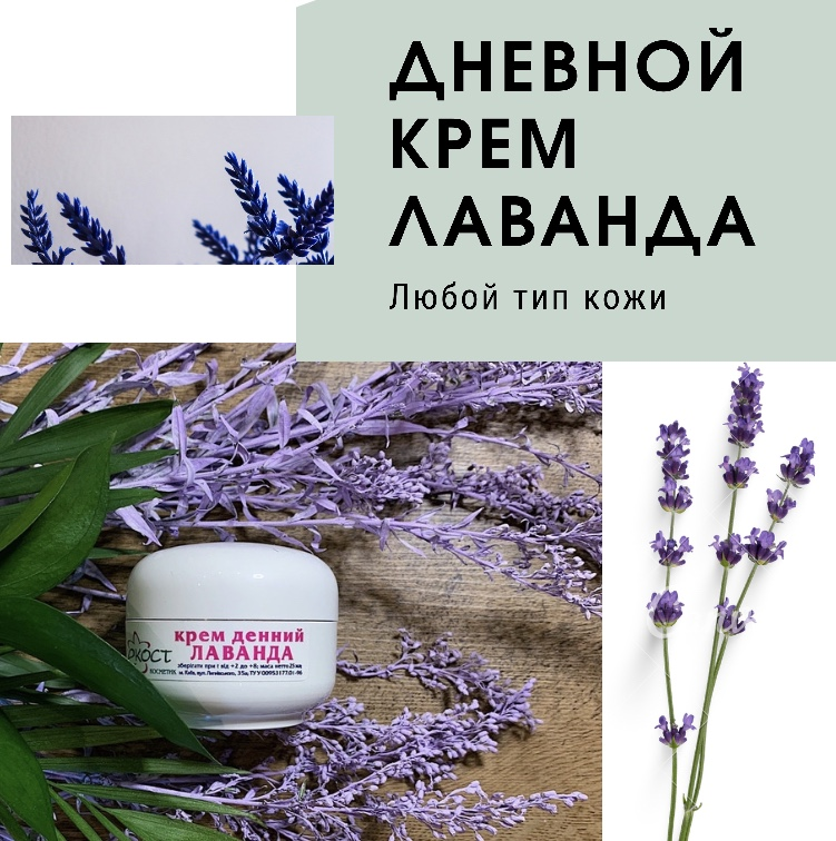 Buy Cream day Lavender