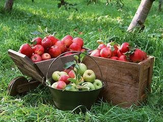 Купить Яблоки на сок
