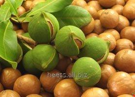 Масло ореха макадами водорастворимое, ВРМ макадамия от 1 кг