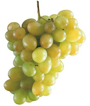 Концентрированный сок белого винограда 65%