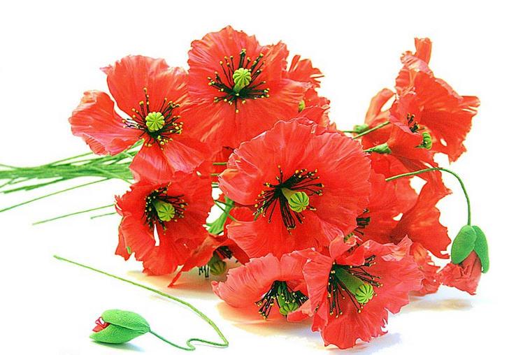 Где купить цветы мака раскова цветы купить