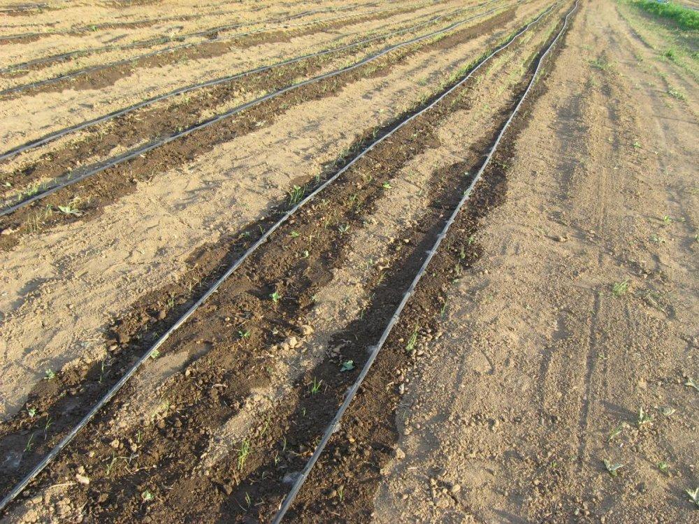 Купить Капельные линия Dual Drip 16-8-23 (1,2 л/ч) Более надежна и устойчива к засорению