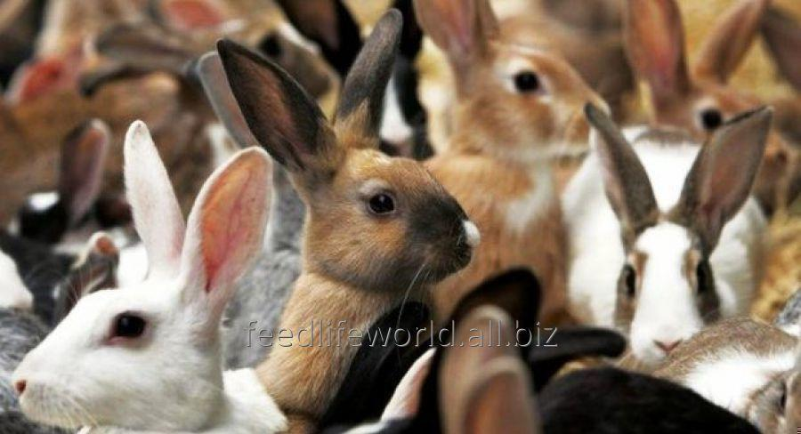 Buy Feedstuff for rabbits