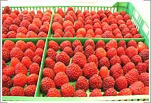 Купить Замороженная и асептическая ягода