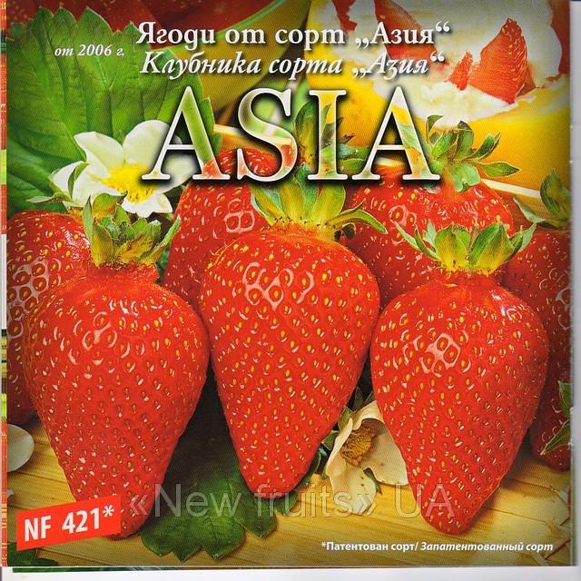 Азия клубника отзывы