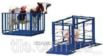 Электронные весы для взвешивания свиней и мелкого рогатого скота УВК-СС 1.5х1.0