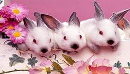 Купить Комбикорм КК-94-1(гранула) для молодняка и взрослых кролей .