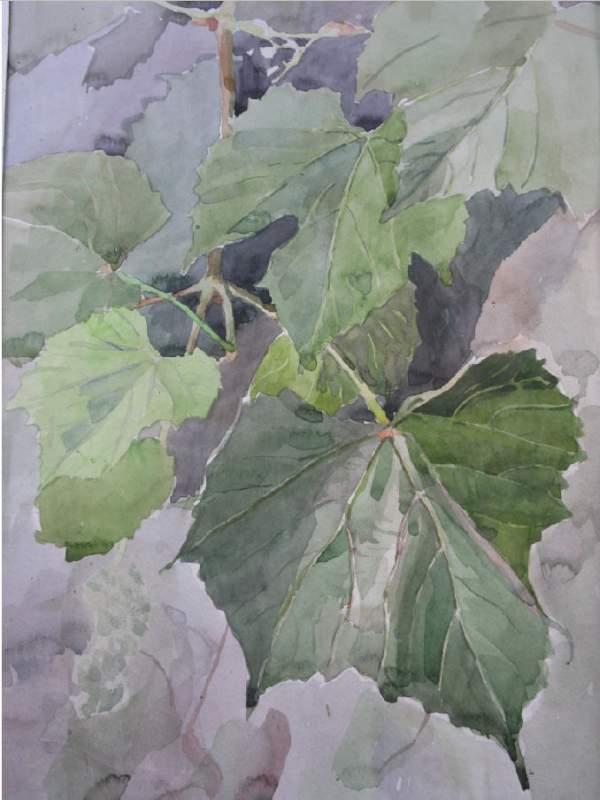 Купить Картины, написанные акварелью 30,40 лист винограда