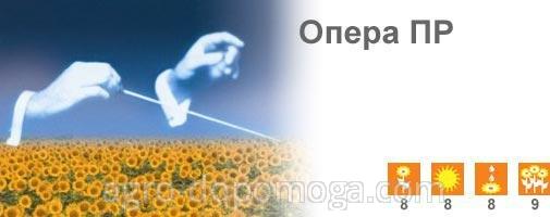 Семена подсолнечника Сингента Опера ПР - посевной материал