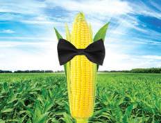 Семена кукурузы СИ Респект