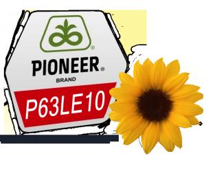 Семена подсолнечника Пионер П63ЛЕ10 (PR63LE10) под гранстар - посевной материал