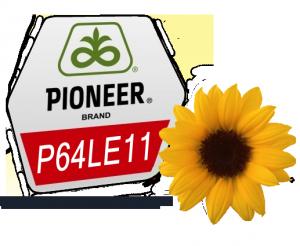 Семена подсолнечника Пионер P64LE11 - посевной материал