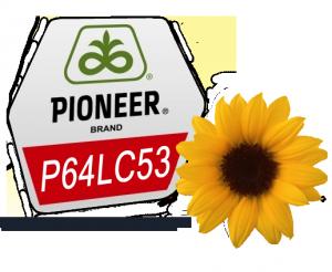 Семена подсолнечника Пионер P64LC53 - посевной материал