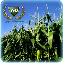 Семена Кукуруза  Кристель