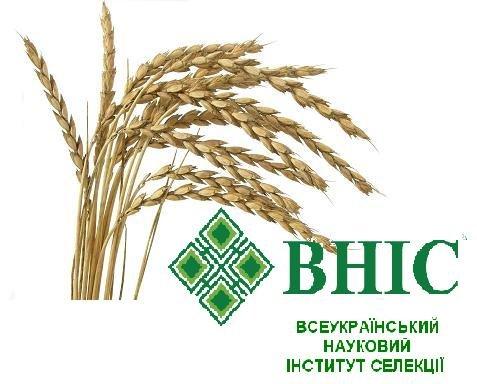 Спельта (полба) сорт «Заря Украины»