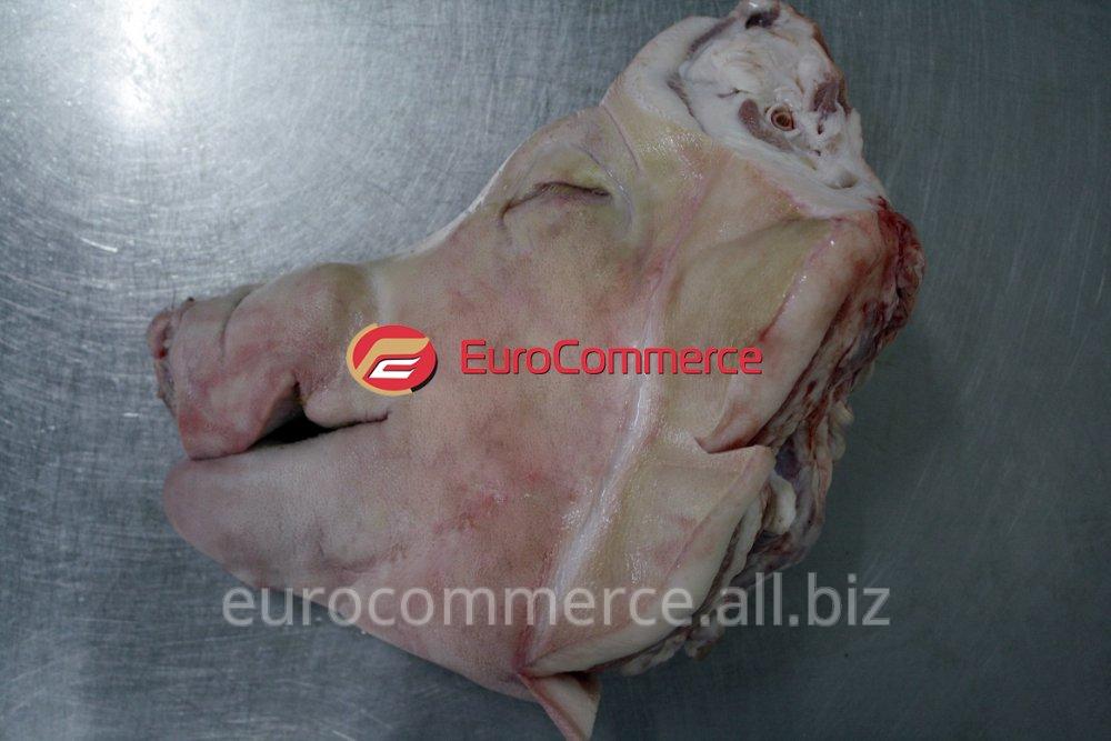 Купить Голова свиная