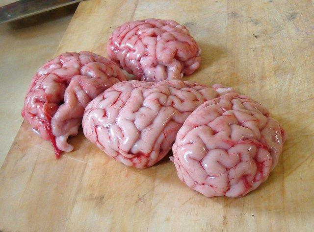 Купить Мозг свиной