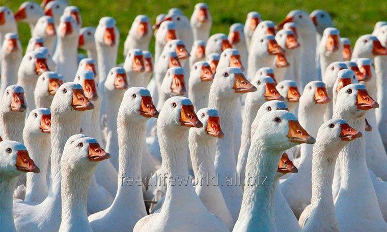 Купить Комбикорм для гусей