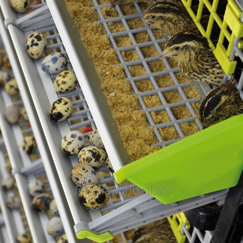 Buy Feed for quails