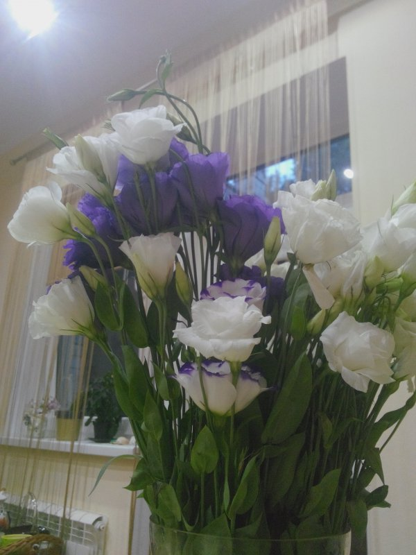 Цветы цена купить