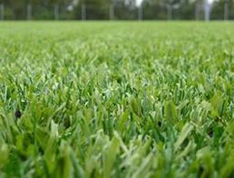 Купить Искусственное травяное покрытие