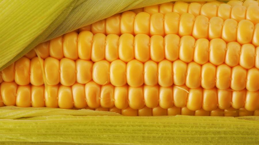 Купити Кукурудза на експорт