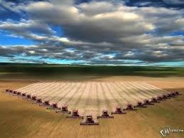 Купить Семена озимой пшеницы Одесская 267