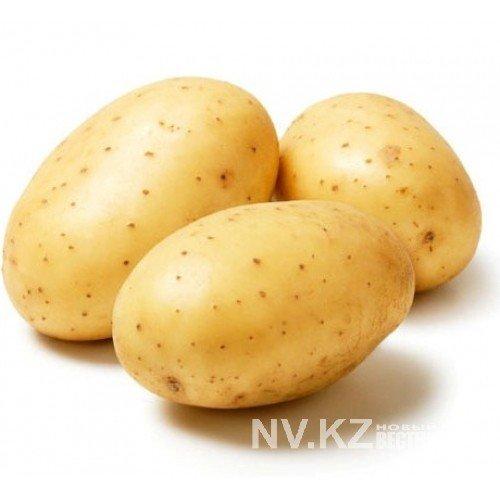 Купить Картопля Рівєра 2 репродукція