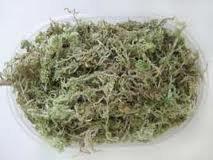 Купить Сушеный мох сфагнум