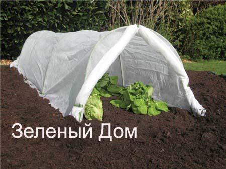 Как садить рассаду клубники весной