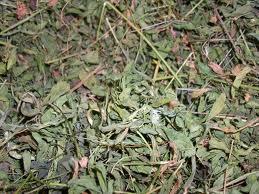 Купить Травы сушеные, Травы сушеные оптом, Травы сушеные оптом купить, Травы сушеные оптом Львов