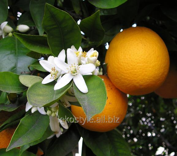Эфирное масло апельсина горького